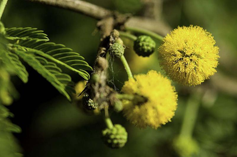 Estudos de fauna e flora