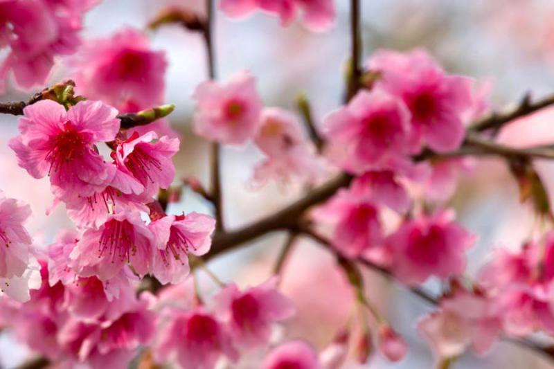 Levantamento florístico