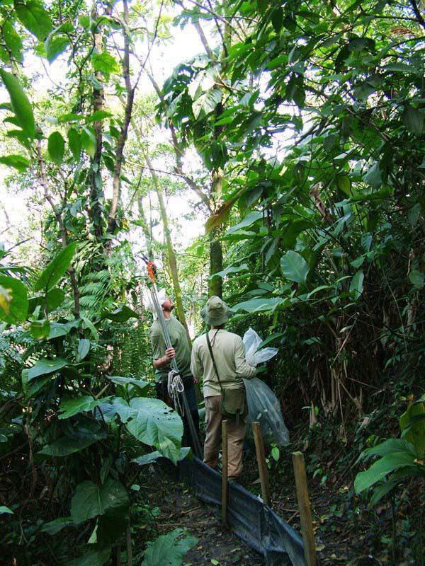Monitoramento de flora