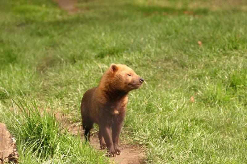 Plano de afugentamento de fauna