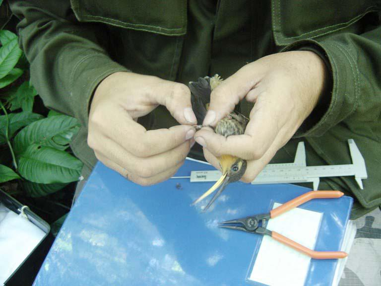 Programa de monitoramento de fauna