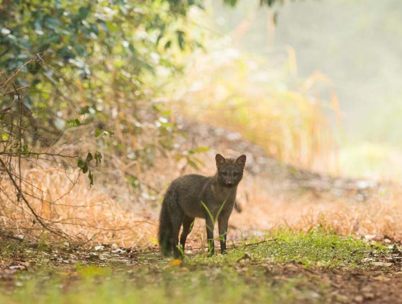 Plano de salvamento de fauna
