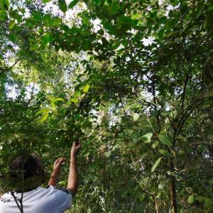 Programa de monitoramento de flora