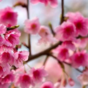 Levantamento floristico