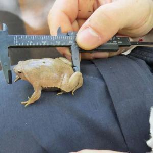 Monitoramento de fauna